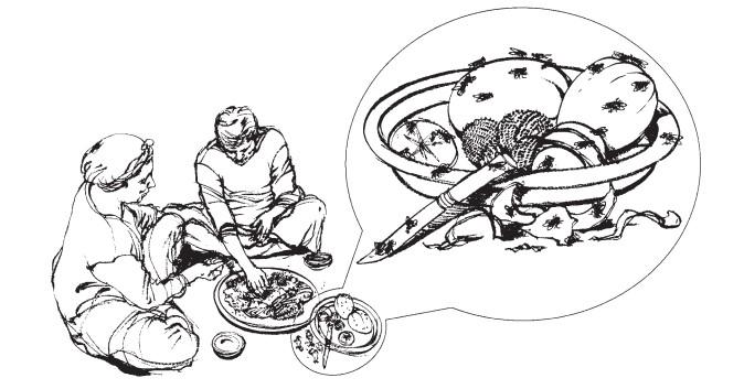 انسان با خوردن غذای آلوده به مگس میتواند بیمار شود