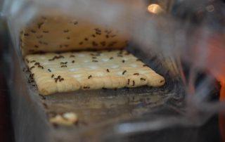 مورچه ها در خانه